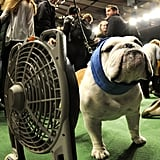 Staying cool for the hotly contested Bulldog competition.