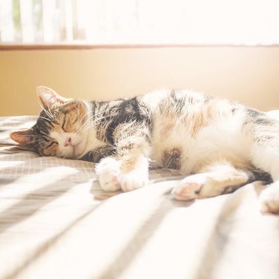 Can Cats Get a Sunburn?