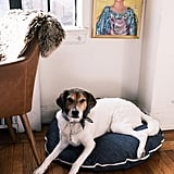 Madewell x Parachute Denim Dog Bed