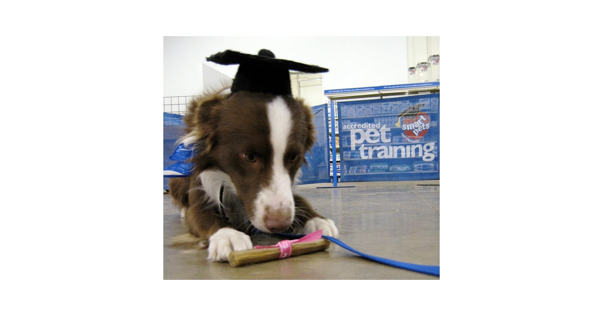 what do they teach dogs in obedience school