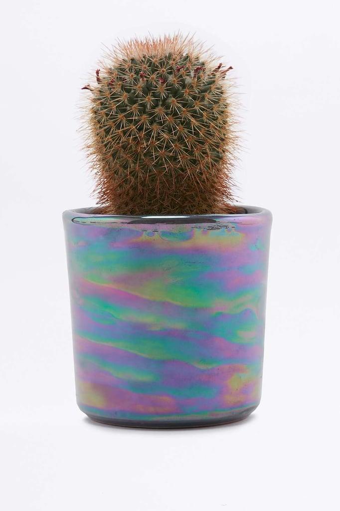 Oil Slick Planter ($15)