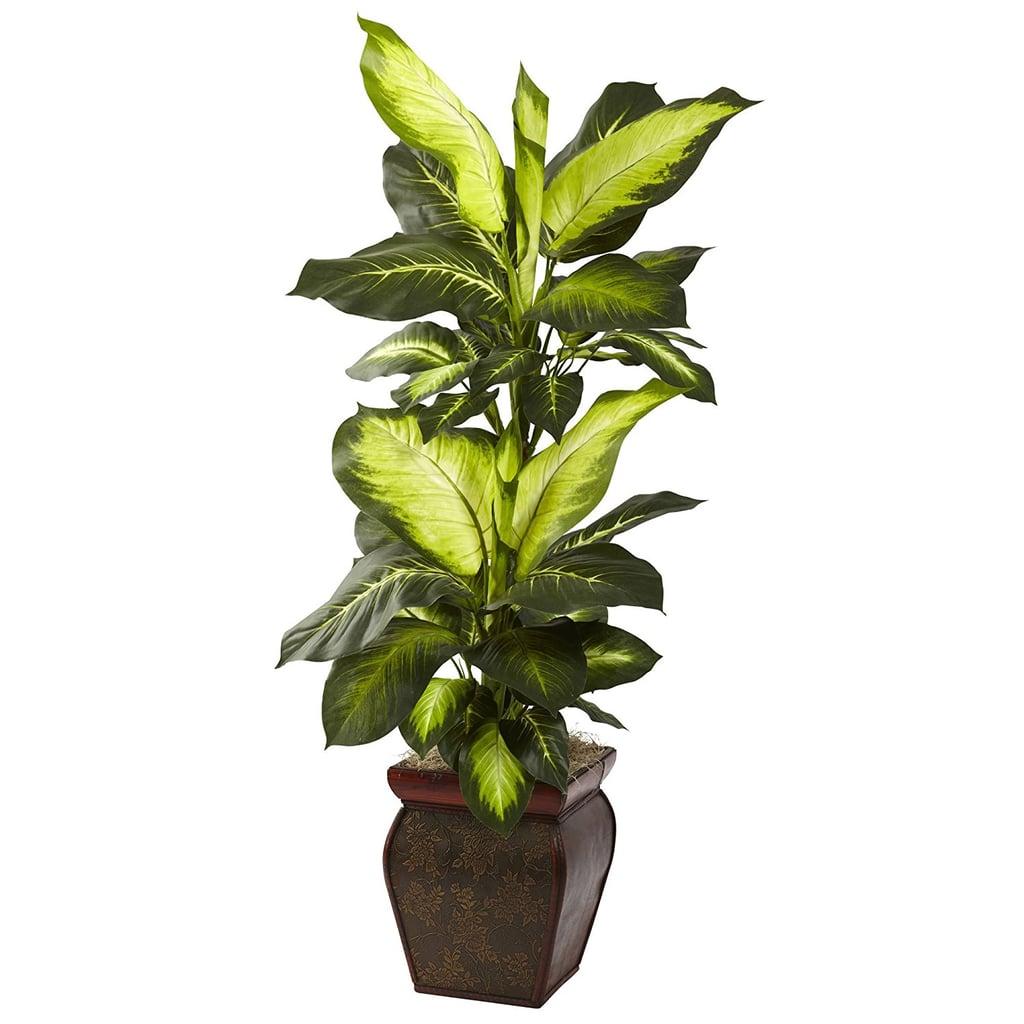 Golden Dieffenbachia With Decorative Planter
