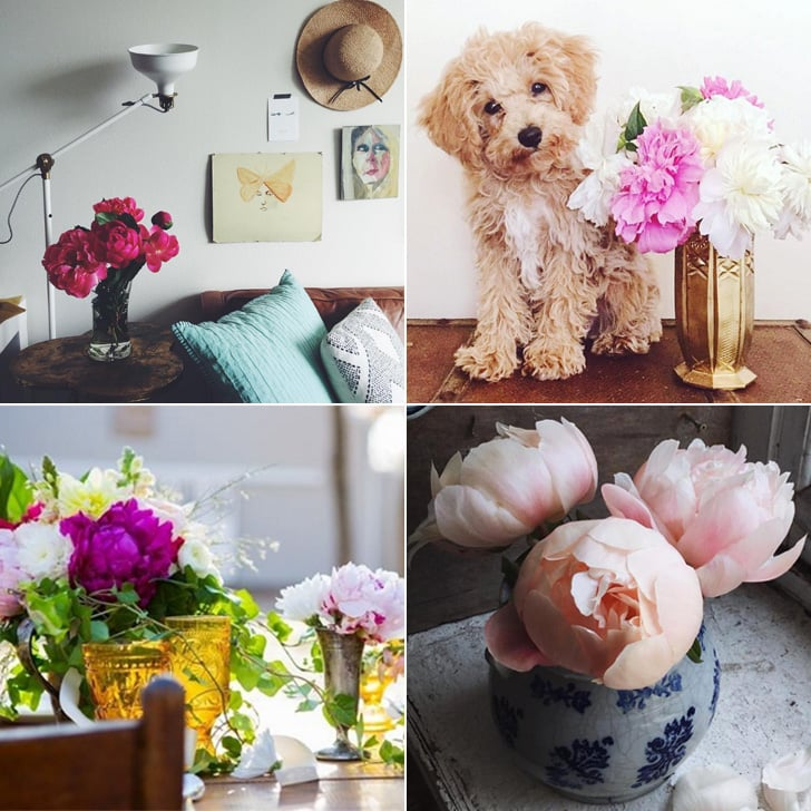 How to Display Peonies in your Home