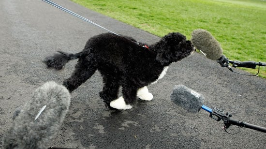 Photos of Barack Obama's Dog Bo