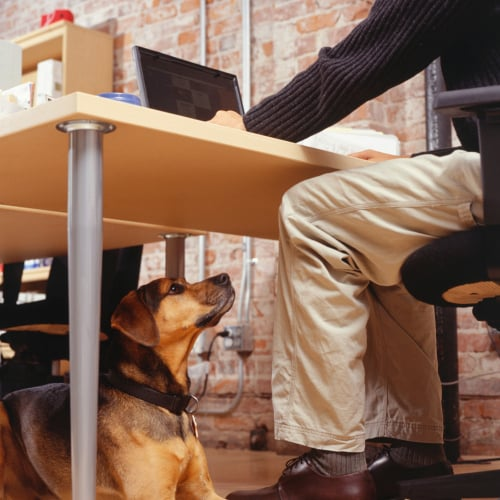 Bringing Dogs to Work