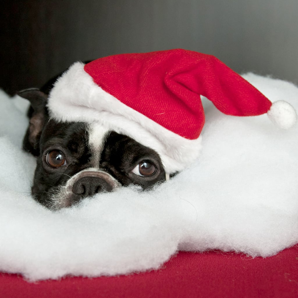Cute dogs in santa hats pictures popsugar pets