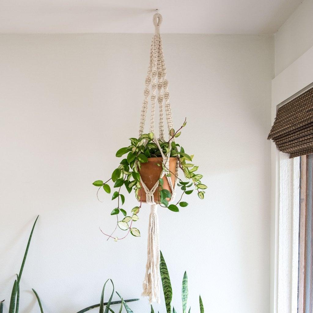 Joanna Gaines\'s Favorite Plants   POPSUGAR Home