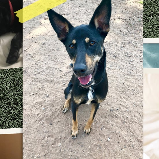 POPSUGAR Staffers Share Why Their Dogs Are Amazing