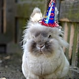 I'm Celebrating