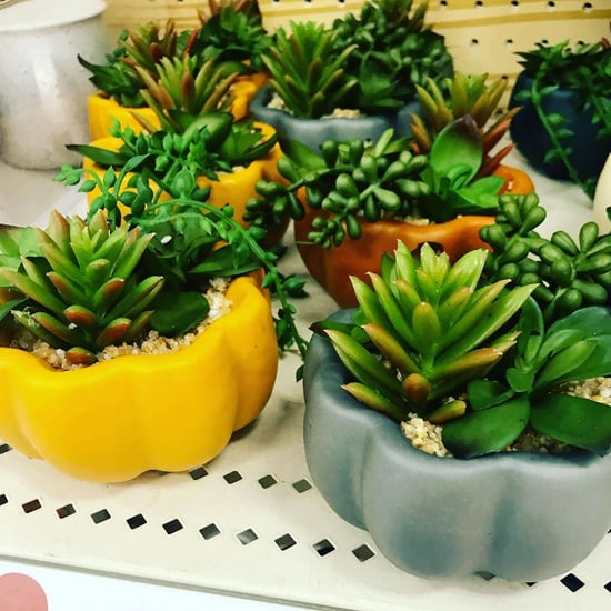 Target's $5 Succulent Pumpkins Are a Fall Must Have