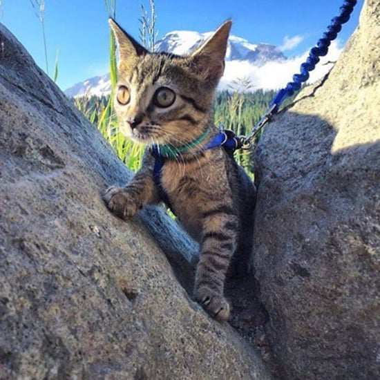 Adventure Cats Hiking Instagram