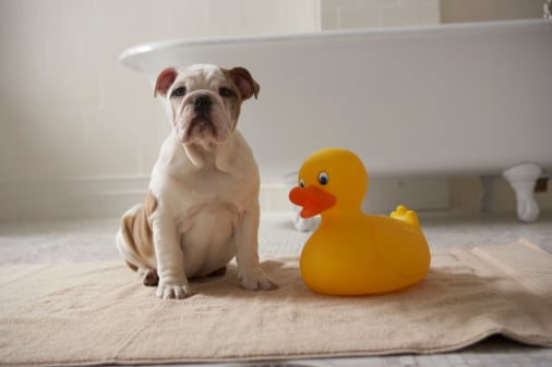 Pet Bath Time Essentials