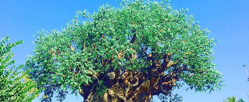 Fun Facts About Disney's Animal Kingdom