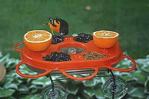 Feed the Birds: Fruit Feeder and Jelly