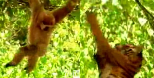 This Monkey Is Just Asking For It