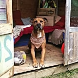 A pet shed allows pets to relax in the shade when they aren't exercising in the backyard.