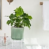 Fern Ceramic Planter With Stand