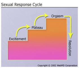 Dear Quiz: What Did You Learn About the Sexual Response Cycle?