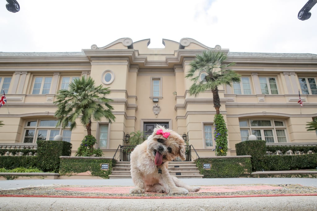 marnie the dog 39 s los angeles airbnb popsugar pets