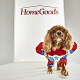 Pet Halloween Costumes From HomeGoods