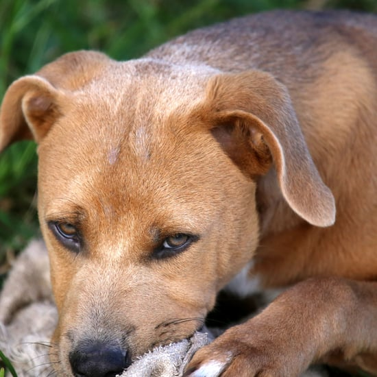 Should I Get Rid of My Dog If It Bites My Child?