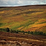 Orange and yellow shades took over the North Yorkshire Moors in Pickering, England.
