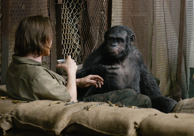 Some friendly ape-human interaction appears to be possible.