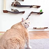 Photos of Bronson the 33-Pound Cat