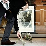 A man set flowers beneath a photo of Mandela in Belgium.