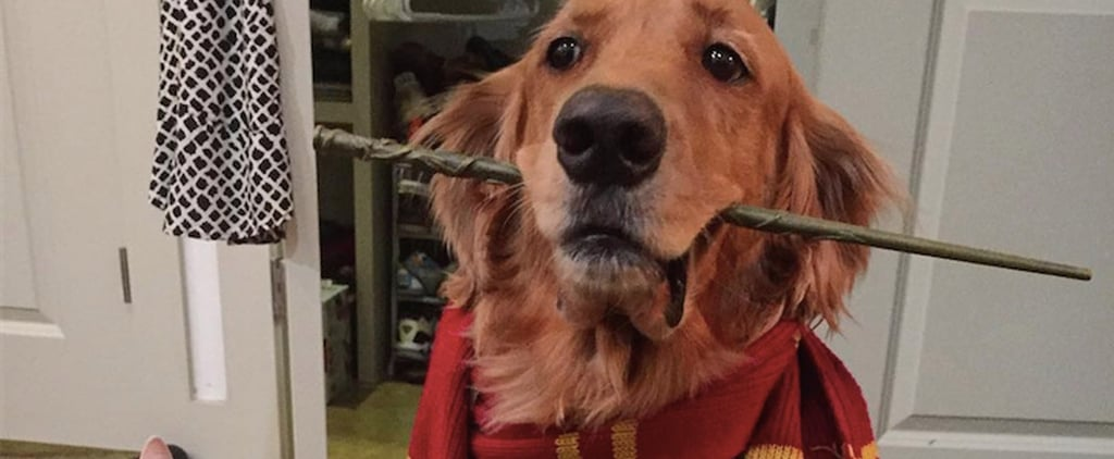 These Harry Potter Costumes For Pups Are Simply Magical