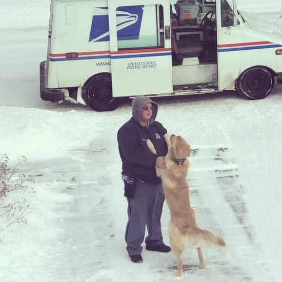 Videos of Golden Retriever and His Best Friend, the Mailman