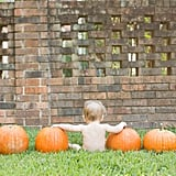 Roll Out the Pumpkins