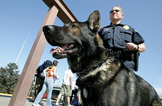 Parents Hire Drug-Sniffing Dogs to Check Up on Their Kids
