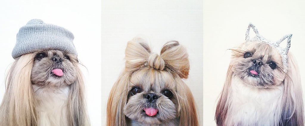 Warning: You're About to Be Totally Obsessed With This Tiny, Stylish Dog
