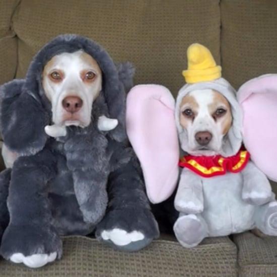 فيديو رائج لكلاب تُجرب إطلالات الهالوين