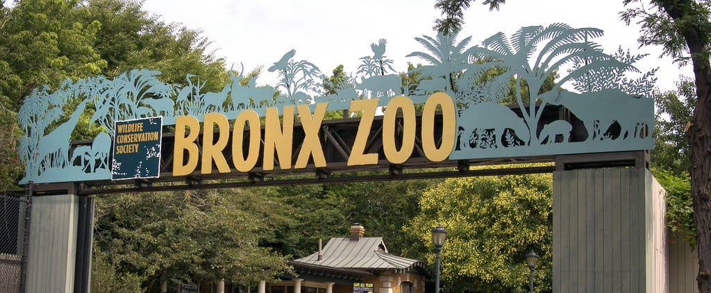 Where to Watch The Zoo Online