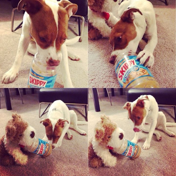 """""""Friend gave her dog an empty peanut butter jar last night and he shared it with his stuffed puppy."""" Source: Reddit user StarryEyedLepus via Imgur"""