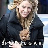 Blake Lively braved the NYC wind with her tiny little pup, Penny, while on the set of Gossip Girl back in March 2008.