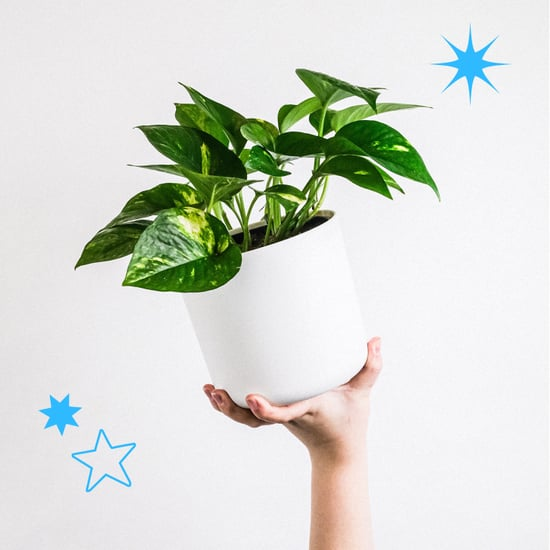 The Best Houseplants For Cold and Flu
