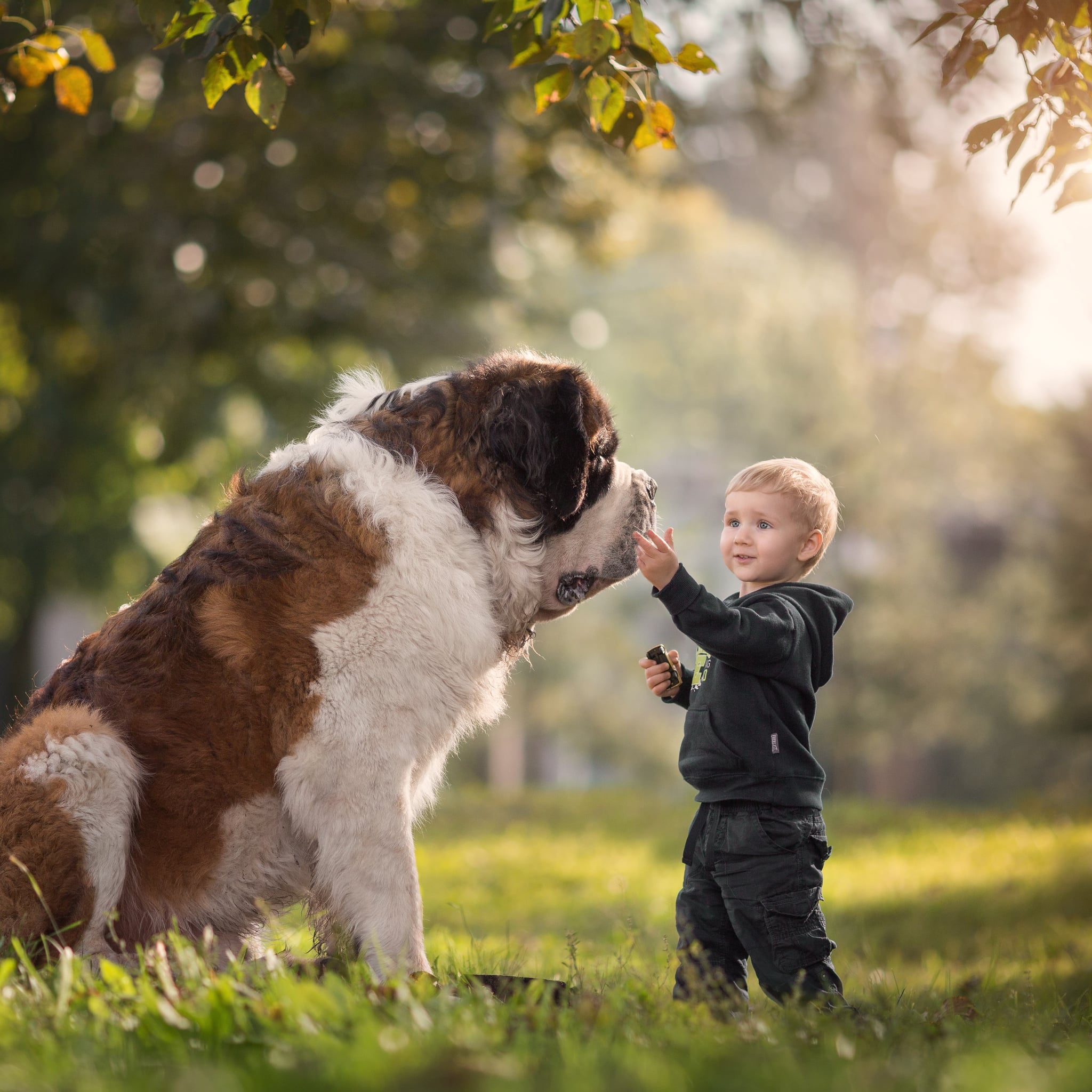 Photo Series on Big Dogs and Little Kids | POPSUGAR Family
