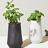Modern Sprout Tapered Tumbler Basil Hydro Grow Kit