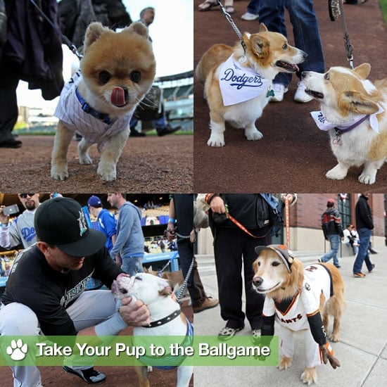 Dogs at Baseball Games Pictures