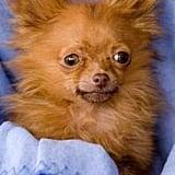 The Scoop: Tiny Dancer Dog Dies!