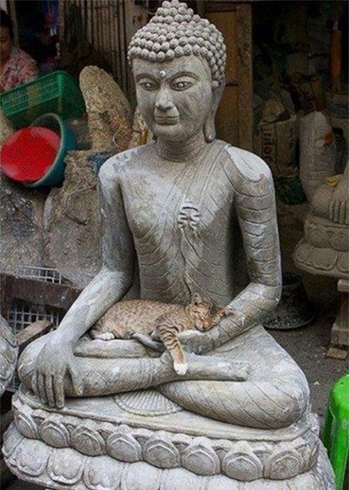 This very zen feline