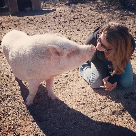 Arizona Pig Sanctuary
