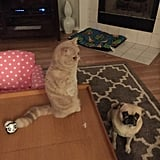 A pug and a meerkat cat in one home? Talk about heaven.