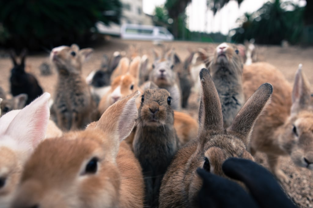 Be One With Rabbits
