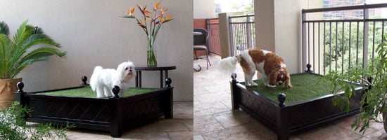 Penthouse Indoor Potty: Spoiled Sweet or Spoiled Rotten