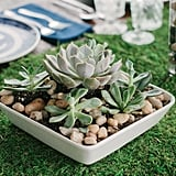 Succulent Garden Centerpieces