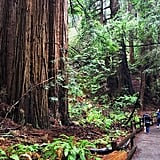 Muir Woods, Giant Redwoods, and Sausalito Half-Day Trip (San Francisco, CA)